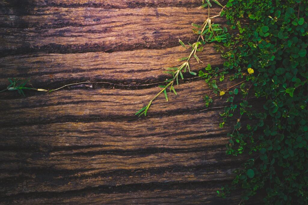 5 Easy Tips to Make Your Business More Earth-Friendly Right Now!